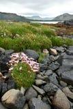 Хозяйственность моря цветет побережье Шотландия стоковая фотография rf