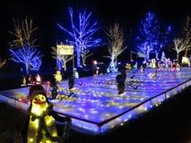 Хоккей на льде пингвина Стоковые Фото