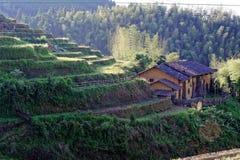 Холмистое террасное поле Стоковое фото RF