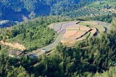 Холмистое террасное поле Стоковое Изображение