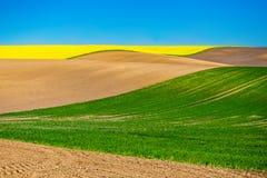 Холмистый ландшафт Сельскохозяйственные угодья культивируемые в сельском районе Концепция Cozla стоковые изображения rf