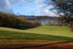 Холмообразный ландшафт с буком в Нидерланды. Стоковые Изображения RF