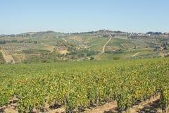 холмы Италия гребут виноградники Тосканы Стоковое Изображение RF