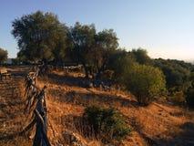 холмы Италия gargano apulia Стоковые Изображения