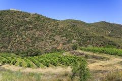 Холмы и виноградники Schisty †долины Дуэро « Стоковые Фотографии RF