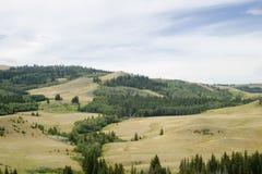 холмы кипариса Стоковое фото RF