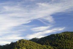 холмы лесистые стоковое фото rf