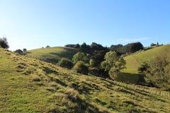 Холмы, луга, и куст на овце Новой Зеландии обрабатывают землю Стоковая Фотография