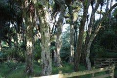 Холмы, луга, и куст на овце Новой Зеландии обрабатывают землю стоковые изображения