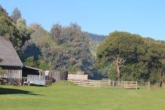 Холмы, луга, и куст на овце Новой Зеландии обрабатывают землю Стоковое Изображение
