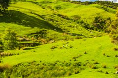 Холмы Новой Зеландии Стоковые Фотографии RF