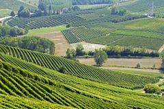Холмы с виноградниками Стоковые Изображения