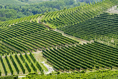 Холмы с виноградниками стоковые фотографии rf