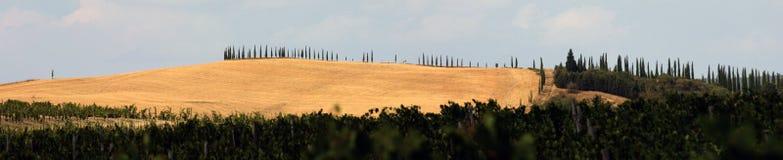 холмы Тоскана Стоковые Изображения RF