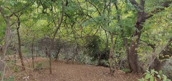 Холмы Anantagiri стоковое изображение rf