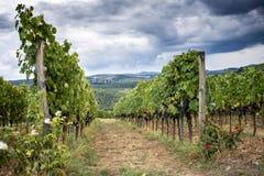 Холмы Chianti с виноградниками Тосканский ландшафт между Сиеной и Флоренсом Италия Стоковая Фотография RF