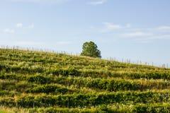 Холм в северной Хорватии Стоковая Фотография