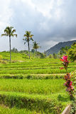 холм Индонесия засаживает наклон тропический стоковые фото