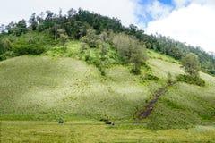 Холм и поле Teletubbies Стоковое Изображение