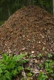 холм муравея Стоковые Фото