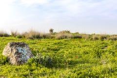Холм одичалой травы с красным камнем маков и ослеплять солнечным светом стоковые фото