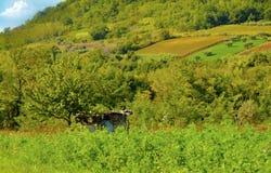 холм сельский Стоковая Фотография RF