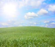 холм травы Стоковые Фотографии RF