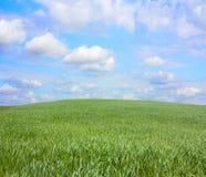 холм травы Стоковая Фотография