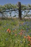 холм texas страны Стоковое Изображение RF