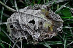 холода листья сперва Стоковое Изображение