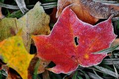 холода листья сперва Стоковые Изображения