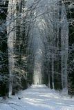 холодная бортовая прогулка взятия Стоковая Фотография RF