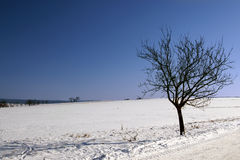 холодная зима дня Стоковые Изображения