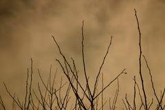 холодная зима Стоковое Фото