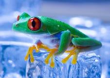 холодная лягушка Стоковое Изображение