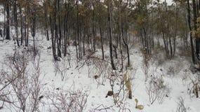 холодная пуща Стоковая Фотография