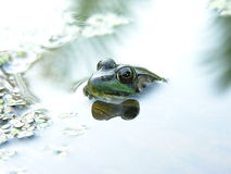 холодная съемка лягушки Стоковые Фото