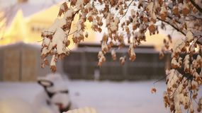 Холодное красочное утро вполне сработанности стоковые фотографии rf