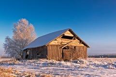 Холодное утро на полях зимы Стоковые Фото