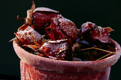 холодные розы Стоковое Фото