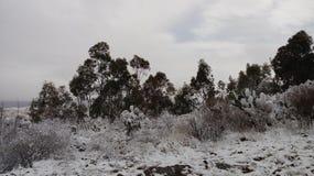 холодный день Стоковые Фотографии RF