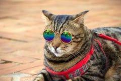 Холодный кот стоковые изображения