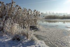 Холодный морозный зимний день над спокойным озером стоковые изображения
