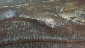 Холодный снежный лес видеоматериал