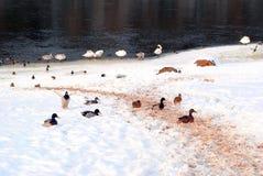 Холод делает возвращение Стоковые Фото