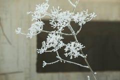 Холод предпосылки зимы льда снега Стоковое Изображение