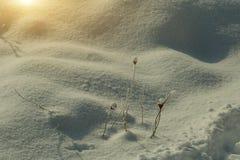 Холод предпосылки зимы льда снега Стоковое фото RF