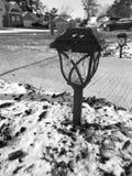 Холод утра Стоковое Изображение RF