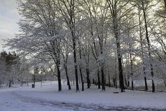 Холод Финляндия леса снега зимы захода солнца стоковая фотография