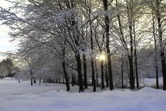 Холод Финляндия леса снега зимы захода солнца Стоковые Изображения